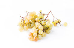 Twigs green ripe grapes Royalty Free Stock Photo