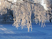 Twigs in hoarfrost - background Stock Photos