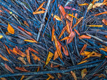 Twigs and leaves. Brought by oceanic tide - Brazil Royalty Free Stock Image