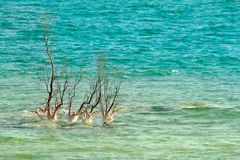 Lonely tree among waves on Dead Sea in Israel. Stock Photo
