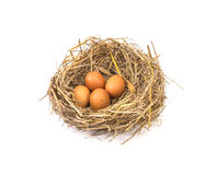 twigs nest with brown chicken eggs Royalty Free Stock Photo