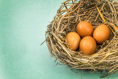 Twigs nest with brown chicken eggs Stock Photos