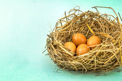 Twigs nest with brown chicken eggs Royalty Free Stock Images