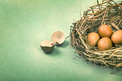 Twigs nest with brown chicken eggs with broken and empty shell e Royalty Free Stock Image