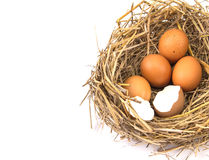 Twigs nest with brown chicken eggs with broken and empty shell e Stock Image