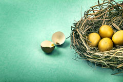 Twigs nest with brown chicken eggs with broken and empty shell e Stock Images