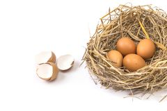 Twigs nest with brown chicken eggs with broken and empty shell e Stock Photography