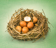 Twigs nest with brown chicken eggs with broken and empty shell e Royalty Free Stock Photos