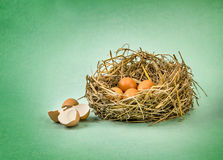 Twigs nest with brown chicken eggs with broken and empty shell e Stock Photos