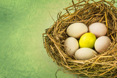 Twigs nest with white egg and one of different or unique Royalty Free Stock Photography