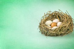 Twigs nest with white egg and one of different or unique Royalty Free Stock Photos
