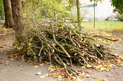 Twigs pile Stock Images