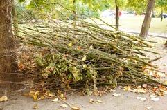 Twigs pile Stock Photo