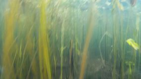 Twigs and plants under water. At the bottom stock video