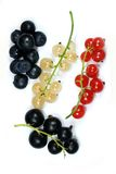 Twigs of red, white and black currant. Isolated on white (ribes ruburum, ribes nigrum Royalty Free Stock Photo