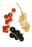 Twigs of red, white and black currant isolated. On white Royalty Free Stock Photos