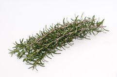 Twigs of rosemary on a white background Royalty Free Stock Images