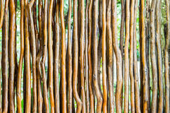 Twigs Royalty Free Stock Image