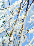 Twigs sheathed with ice Royalty Free Stock Photos