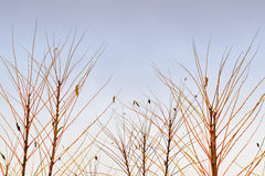 Twigs and sky Stock Photography