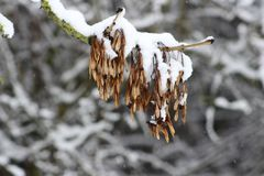 A tree twigs in the winter time. Stock Photos