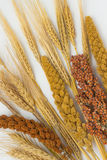 Twigs sorghum, red and yellow millet; barley. Twigs sorghum, red and yellow millet, barley and wheat on a white background stock photos