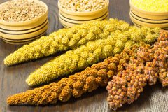Twigs sorghum, red and yellow millet. Wheat, buckwheat and mille. T in the wooden basket royalty free stock images
