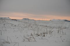 Twigs stick out of the snow in this snow covered field in iceland. This picture shows twigs and branches sticking out of the thick snow covered field in Iceland royalty free stock photo