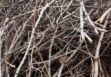 A twigs and the sticks close-up Royalty Free Stock Photo