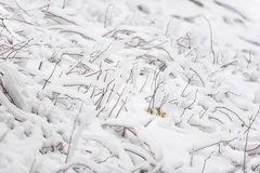 Twigs of tree covering in white hoar frost Royalty Free Stock Photo