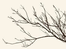 Twigs Royalty Free Stock Images