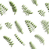 Twigs and wild herbs seamless pattern background  illustration. Delicate spring green twigs and wild herbs seamless pattern background  illustration Royalty Free Stock Image