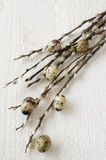 Twigs of willow and quail eggs on a white wooden background, top Royalty Free Stock Photos