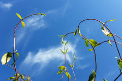 Twigs in the wind. Under blue sky Royalty Free Stock Image
