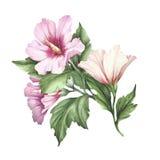 Twijg van hibiscus De hand trekt waterverfillustratie Stock Fotografie