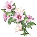 Twijg van hibiscus De hand trekt waterverfillustratie Royalty-vrije Stock Foto's
