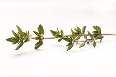 Twijg van thyme tegen wit wordt geïsoleerd dat Stock Afbeelding