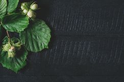Twijgen met omhoog hazelnoten en groene bladeren op een zwarte houten hoogste mening als achtergrond, vers veganistvoedsel op rui royalty-vrije stock afbeelding