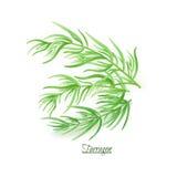 Twijgen van verse heerlijke dragon in realistische stijl Stock Foto's