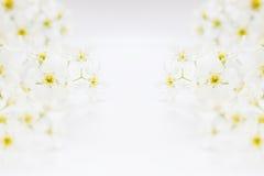 Twijgen van vogel-kers op het water met exemplaarruimte Grens, kader Bloemen achtergrond De lente, huwelijksachtergrond Royalty-vrije Stock Fotografie