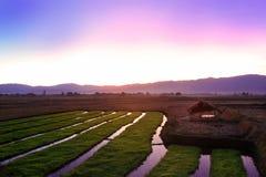 Twilight заход солнца с рисовыми полями в сельской местности Чиангмая, t Стоковая Фотография RF