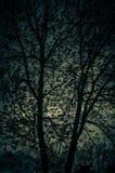Twilight цветы выступая через дерево стоковое изображение rf