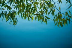 Twilight. Willow tree branches hanging down over the water,shallow focus Stock Photo