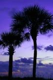 ладони twilight Стоковая Фотография
