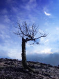 Twilight. A picture of lonely tree against colorful twilight sky Royalty Free Stock Images