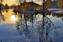 Twilight autumn evening  with reflection of sun in the lake. Royalty Free Stock Photos