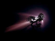 Twilight Bonsai. Bonsai tree in the mist Royalty Free Stock Photography