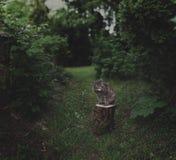 Twilight cat Stock Photography