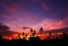 Twilight. Coconut garden Stock Photography