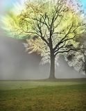 Twilight emotional tree. Strange tree burning with light colors in a fantasy environment Royalty Free Stock Photography